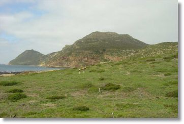 Cape Point Wildlife Reserve