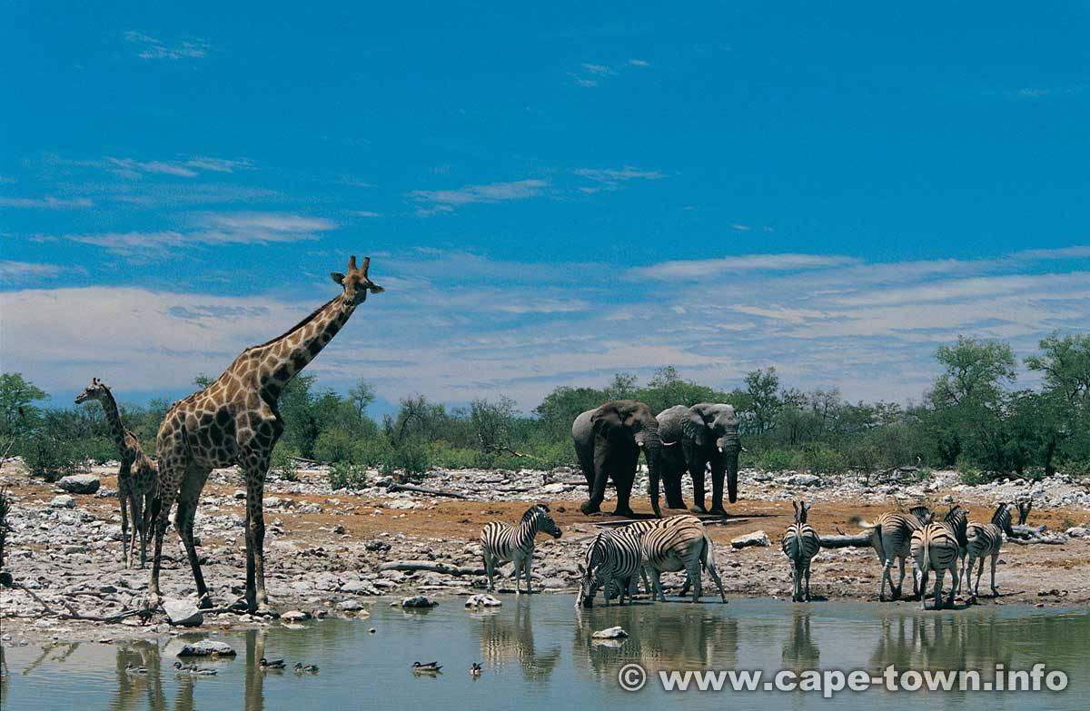 South Africa Safari Pi...